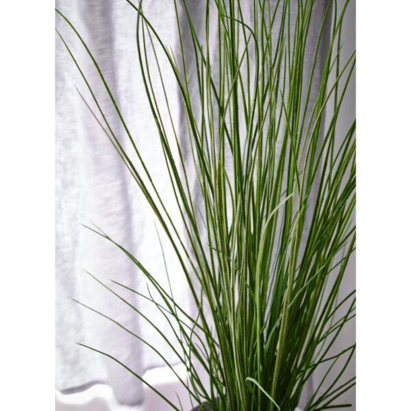 ФЕЙКА Искусственное растение в горшке трава 17 см - Артикул: 903.932.44