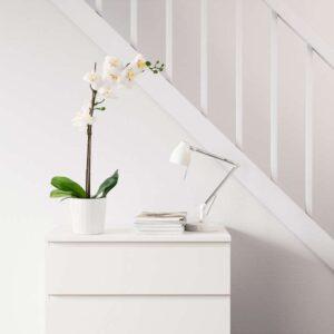 ФЕЙКА Искусственное растение в горшке Орхидея белый 12 см - Артикул: 603.719.60