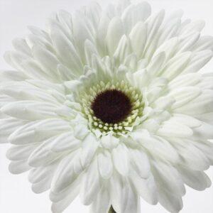 СМИККА Цветок искусственный Гербера/белый 50 см - Артикул: 204.097.76