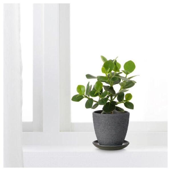 СКАКИГ Горшок цветочный серый 10 см - Артикул: 404.313.52
