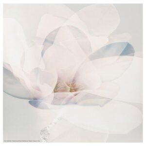 ФРИДЕНЭ Картина, цветок 30x30 см - Артикул: 804.487.27