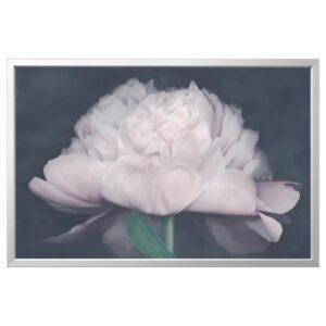 БЬЁРКСТА Картина с рамой, Цветок/цвет алюминия 118x78 см | 092.984.02