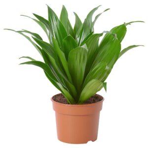 КОМПАКТА Растение в горшке 9 см - 005.051.99