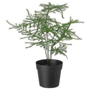 ФЕЙКА Искусственное растение в горшке, д/дома/улицы Аспарагус 9 см - 604.761.32
