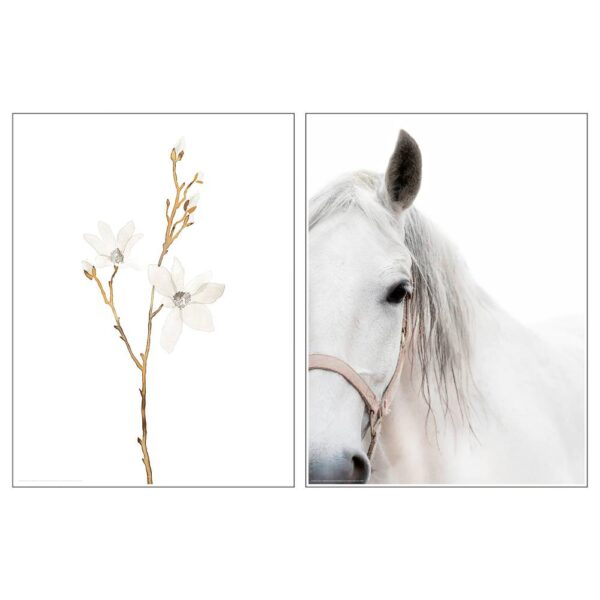 БИЛЬД Постер, Белые цветы и лошадь 30x40 см - 505.004.44
