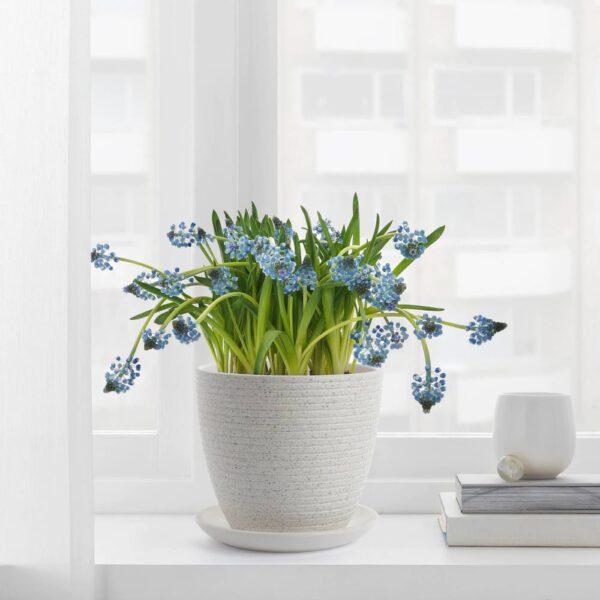 СКАКИГ Горшок цветочный, белый 12 см - 805.183.86