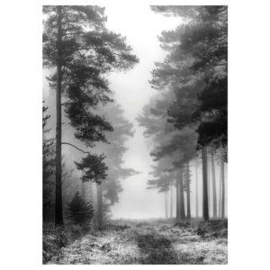 ПЬЕТТЕРИД Картина, Туманный лес 50x70 см - 205.076.87